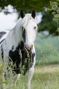 ♥pretty horse♥