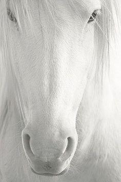 Horse magic • photo/art: Cindy Selvaggio on FineArtAmerica