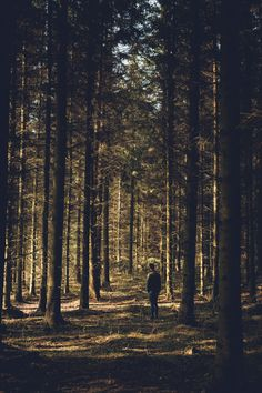 Floresta - Pintura