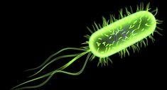 E Coli Bacteria Under Microscope | The New Bridge : Fecal Bacteria in the Hand-Dryers?
