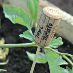 Use wine corks to label garden plants.