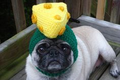 dogs, chees head, knitted hats, pugs, football season