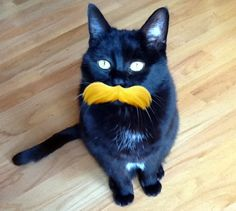 Lorax Kitty!