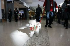 Weary travelers at San Francisco International Airport can now while away time at the terminal by cavorting with specially trained therapy dogs, meant to cheer the homesick, the aggravated, the fuming and the just plain bored.