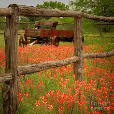 field, spring flower, texa, red wagon, fences, country life, flowers, old wagons, countri