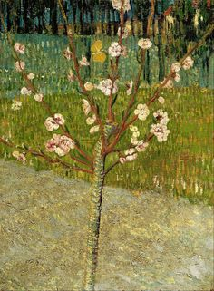 Vincent van Gogh, Almond Tree in Blossom, April 1888. Oil on canvas, 48.5 x 36.0 cm. Van Gogh Museum, Amsterdam.