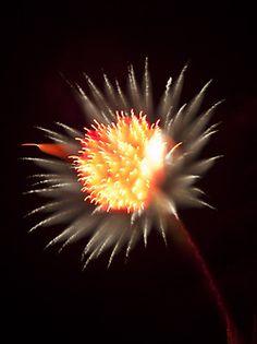 Long Exposure Fireworks - Davey J Photography