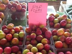 Wild plums @ Appleberry Farm ...