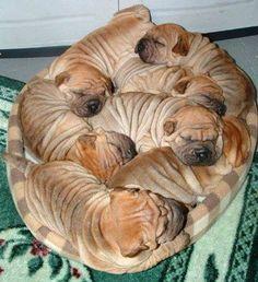 Wrinkle pile lol puppies, anim, shar pei, doggie beds, cinnamon rolls, pet, sharpei, breads, baskets