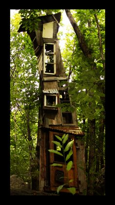 tree house or house tree?