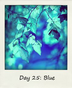 Library Girl Reads & Reviews: Blue #BlogFlash2012 Day 25