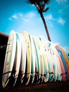 Surf Boards ... I really need to learn ...