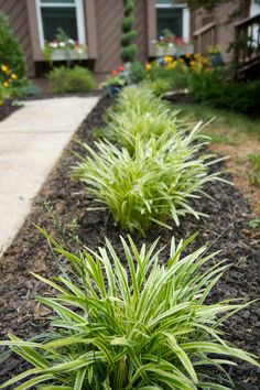 The Richard's Residence.  Variegated Liriope along front walk approach. Landscape Design by Steve Golse. Photography by Mike Moon Studio.