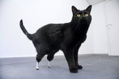 Injured animals keep moving with amazing prosthetics