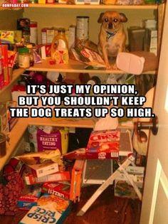 treats, anim, laugh, dogs, stuff, dog treat, pet, funni, humor