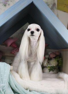 Korean Dog Grooming Style — Maltezer.