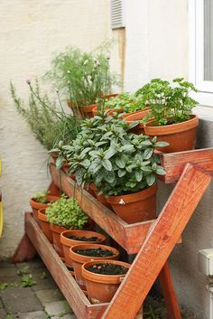 Herb rack | Flickr - Photo Sharing!