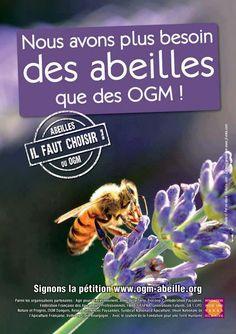 Nous avons plus besoin des abeilles que des #OGM - Nous devons protéger les abeilles de toute urgence ! « Si l'abeille venait à disparaître, l'homme n'aurait plus que quelques années à vivre », prophétisait Einstein…