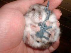 Assault hamster!!