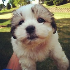 An extremely sincere baby puppy dog. | The 40 Most Adorable Baby Animal Photographs Of 2013