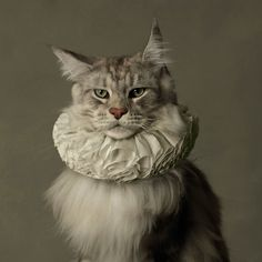 The Elizabethan cat. Sir Reginald Xavier Von Fluffybottom, C.1563     (by MARIE CECILE THIJS)