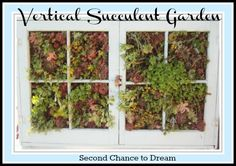 Second Chance to Dream: Vertical Succulent Gardening Tutorial