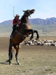 Bishkek, Kyrgyz Republic #horse