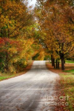 Quiet Vermont Backroad brand new for this season. just published in this article http://jeff-foliage.com/2013/11/2013-year-red-fall-foliage/