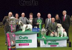 Crufts – Highest entry for three years