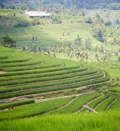 The terraced rice fields near Bali's Batu Kura Temple are perfectly serene.