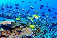 bucket list, seas, great barrier reef, fish, australia, scuba diving, greatbarrierreef, place, coral reefs
