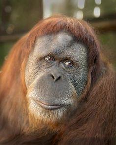 2012 Orangutan SSP Workshop