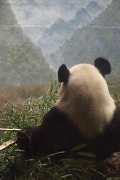 Seize the moment. Like the Panda.