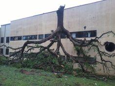 tree  Dallas Area Tornadoes April 2012