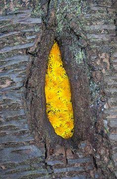 natur art, dandelion knot, mother natur, aliv, knots, landart, escher, pools