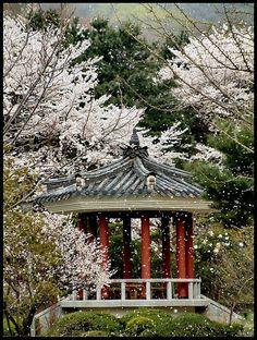 Korea - in the spring