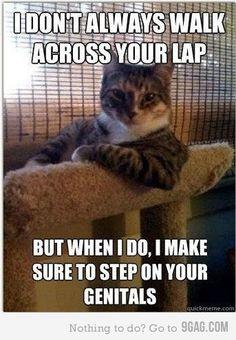 truth kitty