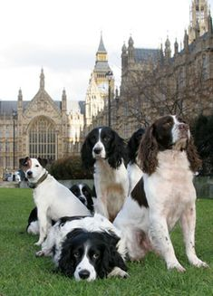 British Pups; Jack Russell to the Left Back there..=D