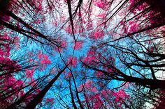 pretty trees :)