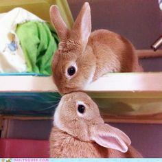 muah! awww, rabbit, anim, pet, bunni kiss, cuti, ador, thing, kisses