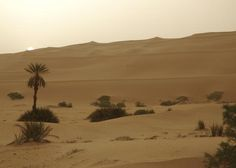 Best places in the World | World's Best Places to Visit.  Sahara Desert - Rode camels here with Kimmy.