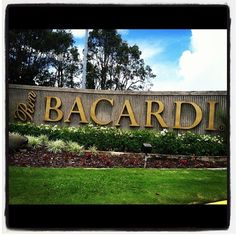 Closer to Old San Juan, pay a visit to the Casa Bacardi, the Bacardi Rum Factory, where you can learn more about the history of this drink, see how it's made, and taste samples of the finished product. Cheers!