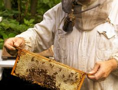 10 Tips for Establishing Your First Hive of Bees
