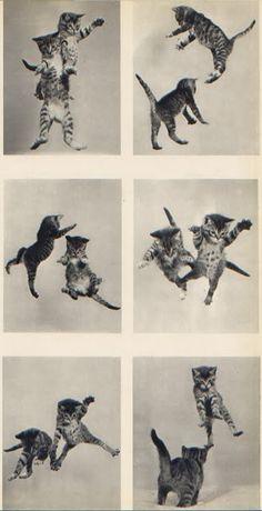 oh kitties.
