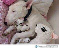 my favorite kind of dogggyyyyyy!!