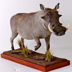 Warthog full body mount.