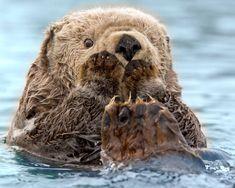 Otter <3!