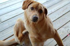 Natural Pet Remedies for Flea and Tick Control