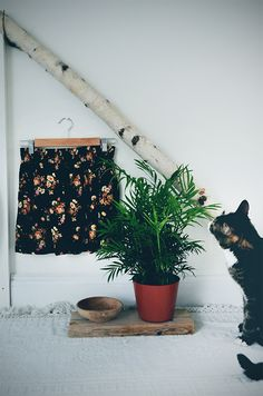 How To Bring The 5 Feng Shui Elements Into Your Home | Free People Blog #freepeople