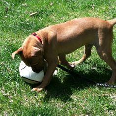 I'll get you soccer ball!